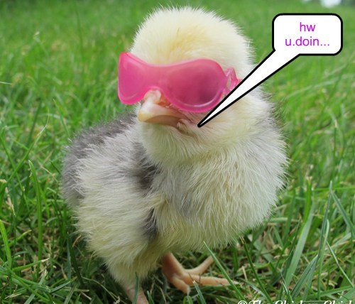 cool,chicks,cute