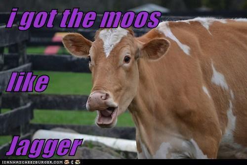 Cheezburger Image 7894621952