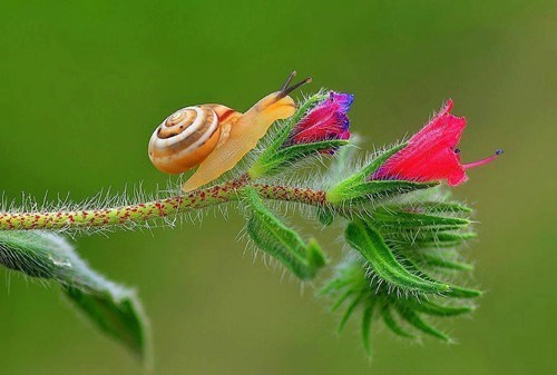 flowers snails surprising beauty - 7895562752