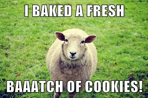 cookies puns sheep wool - 7896094464