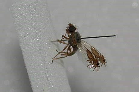 ants fruit fly funny science wtf - 7896241920