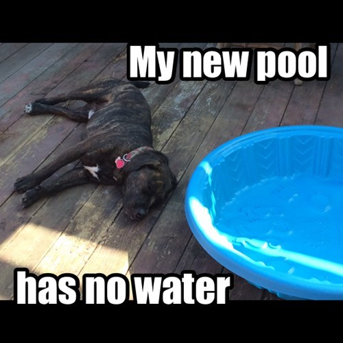 dogs First World Problems pool water - 7896446464