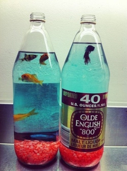 drunk olde english fish funny crunk critters - 7896570624