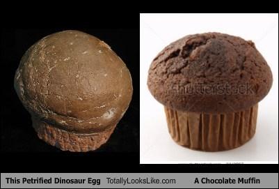 funny,totally looks like,petrified dinosaur egg,chocolate muffins