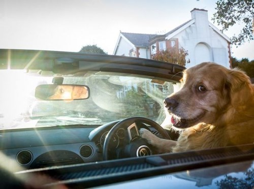 back to the future dog park dogs driving funny movie quotes - 7896741632