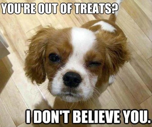 cute dogs treats skeptical - 7896767744