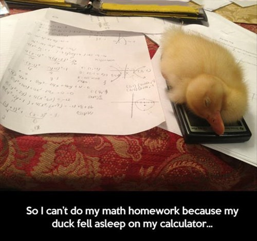 calculator,ducks,excuses,homework