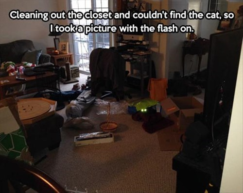 Cats,lost,hidden,flash,works every time