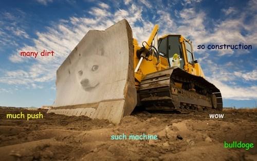 Memes shibe doge - 7897435648