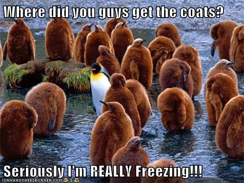cute cold Fluffy penguins