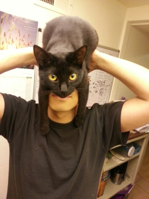 Cats batman catman - 7897634816
