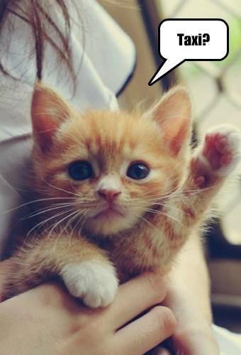 Cats cute kits taxi - 7897810432