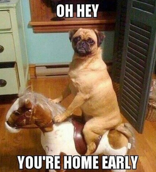 dogs horsie while you were out - 7897955328