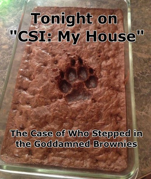 csi,blues clues,brownies,food