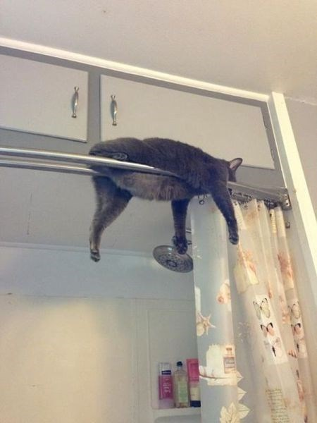 Cats cute funny shower monorail cat - 7898005504