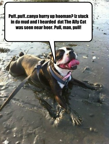 Cats,dogs,mud,stuck