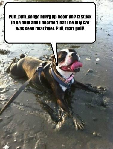 Cats mud stuck - 7898934528