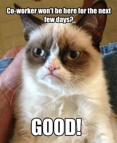Grumpy Cat,work,Memes
