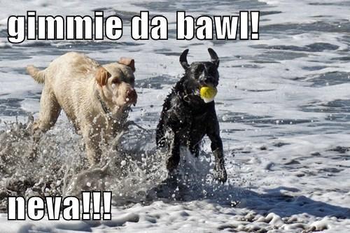 cute beach ball dogs - 7899522048