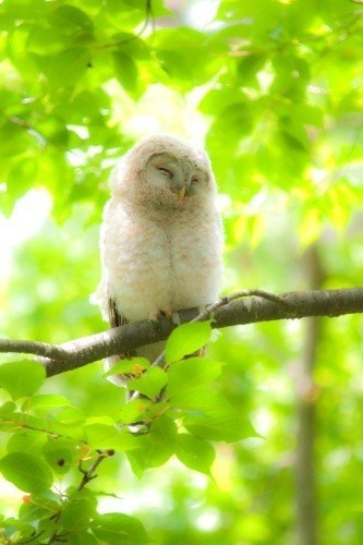 cute owls napping tree squee