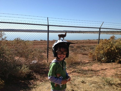 photobomb kids perfectly timed animals - 7899755520