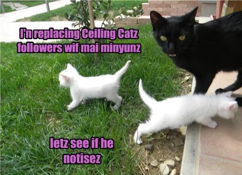Basemint Cat! Yoo Adorabul Littl Prankster.