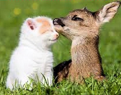 kitten,fawns,friends,cute