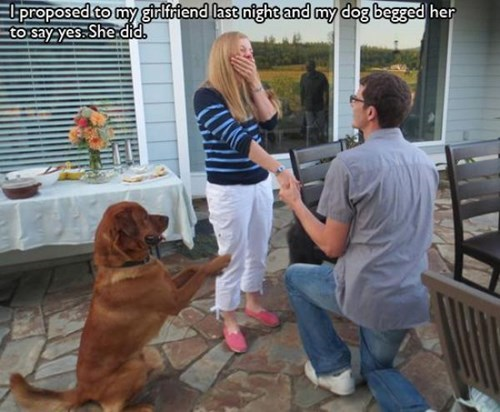 dogs marriage proposal love beg - 7899803392