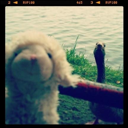 geese stuffed animals photobomb - 7899814656