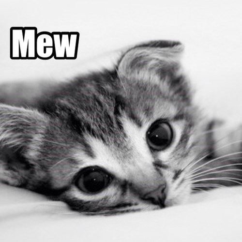 kitten cute Cats squee - 7900116224