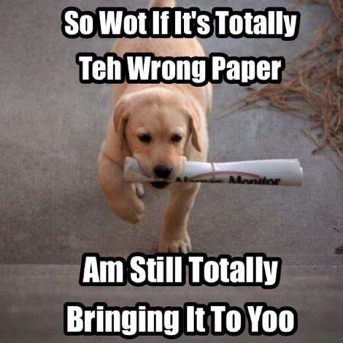 dogs,wrong,Command,obey,newspaper