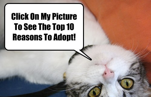 Cats,adoption,dogs,animal rescue