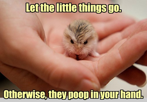 Let the little things go. Otherwise, they poop in your hand. gggggggggggggggggggggggggggggggggggggggggggggggg