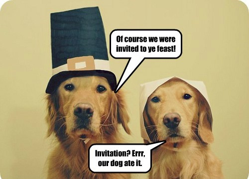 dogs pilgrims thanksgiving cute