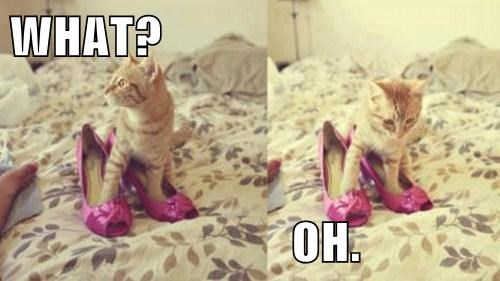shoes surprised embarrassed Cats