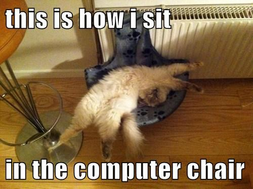 work chairs computer Cats - 7901070848