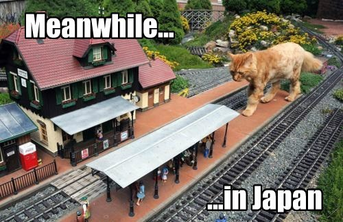 godzilla,Japan,Cats