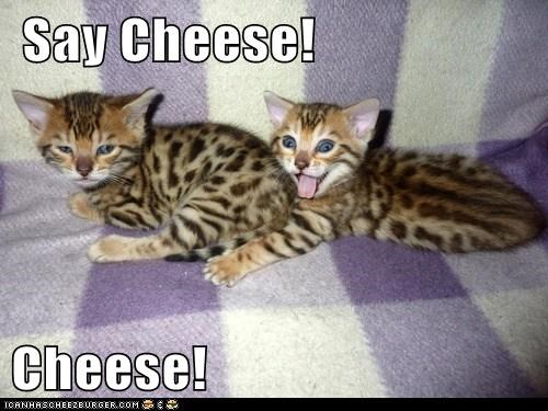 Say Cheese! Cheese!