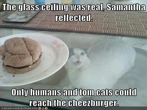 Cheezburger Image 7901172224