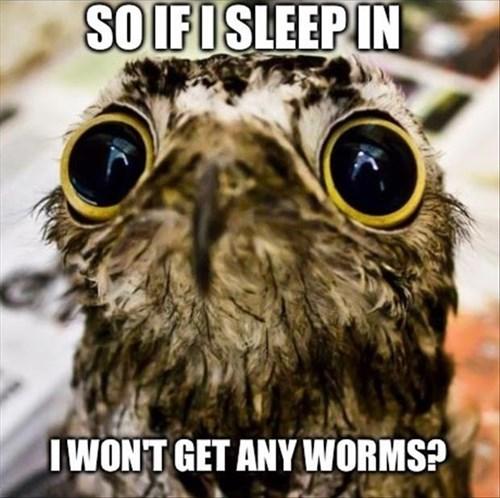 Bird - SOIFISLEEPIN WONT GET ANY WORMS?