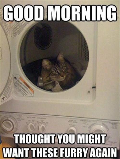 laundry helpful Cats furry - 7901296384