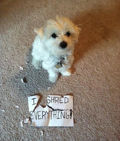 everything shred - 7901298176