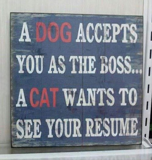 boss dogs signs resume Cats - 7901303808