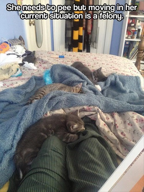 kitten snuggle get up Cats - 7901306624