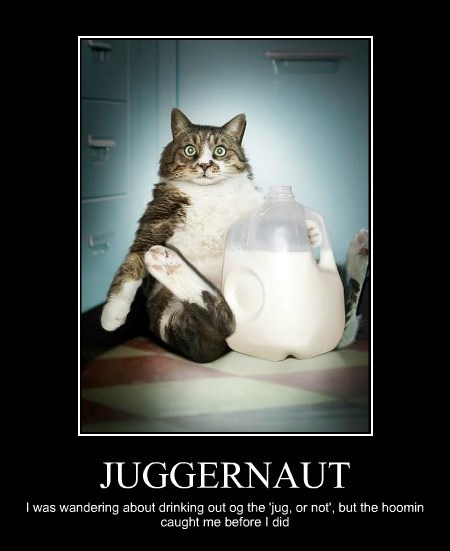 caught jug milk Cats - 7901327104