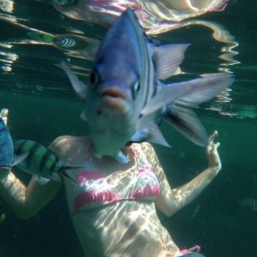 fish photobomb - 7901382400