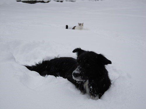 Cats,dogs,snow,photobomb