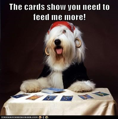 The cards show you need to feed me more!