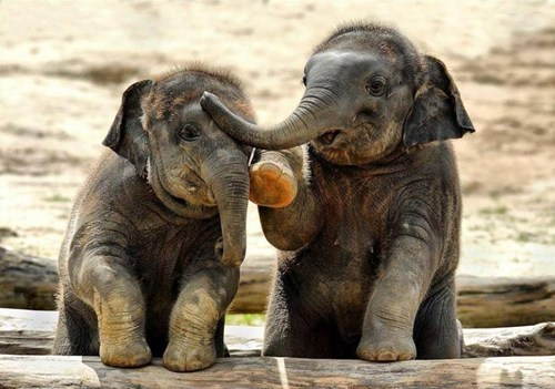 Baby elephants chat