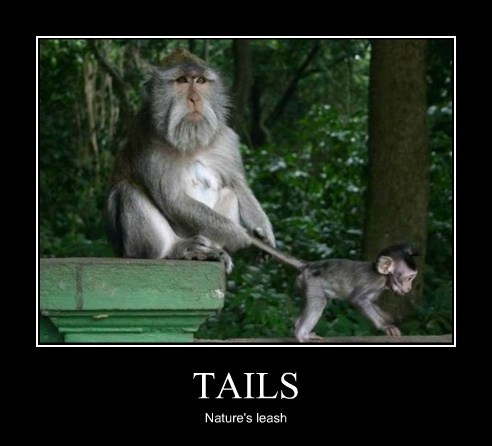 children leash kids parenting tails monkeys